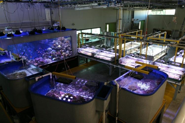 AIMS-SeaSim-Reef-Tanks